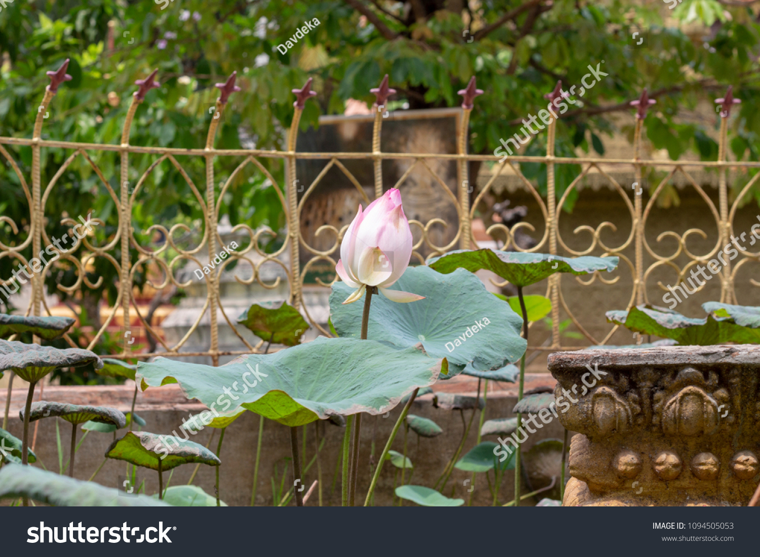 Pink White Lotus Flower Buddhist Temple Stock Photo Edit Now