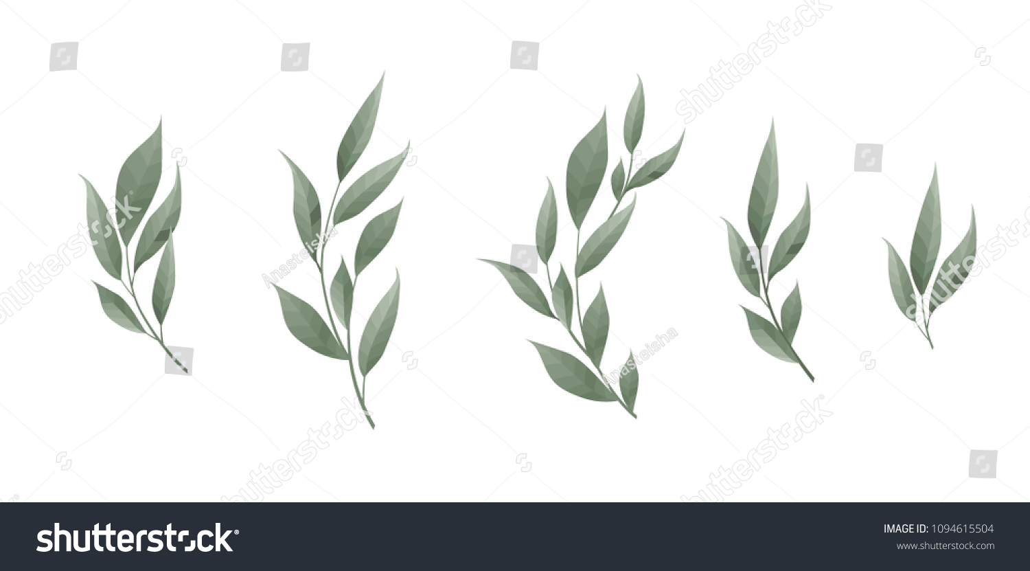 Vector set. Bay leaf. Green leaves on white background. Vector illustration #1094615504