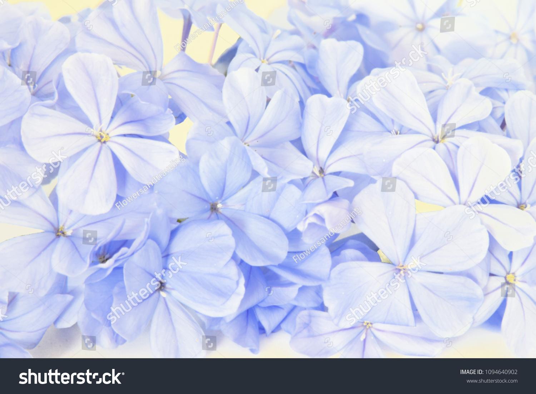 Pastel Blue Flowers Background Stock Photo Edit Now 1094640902
