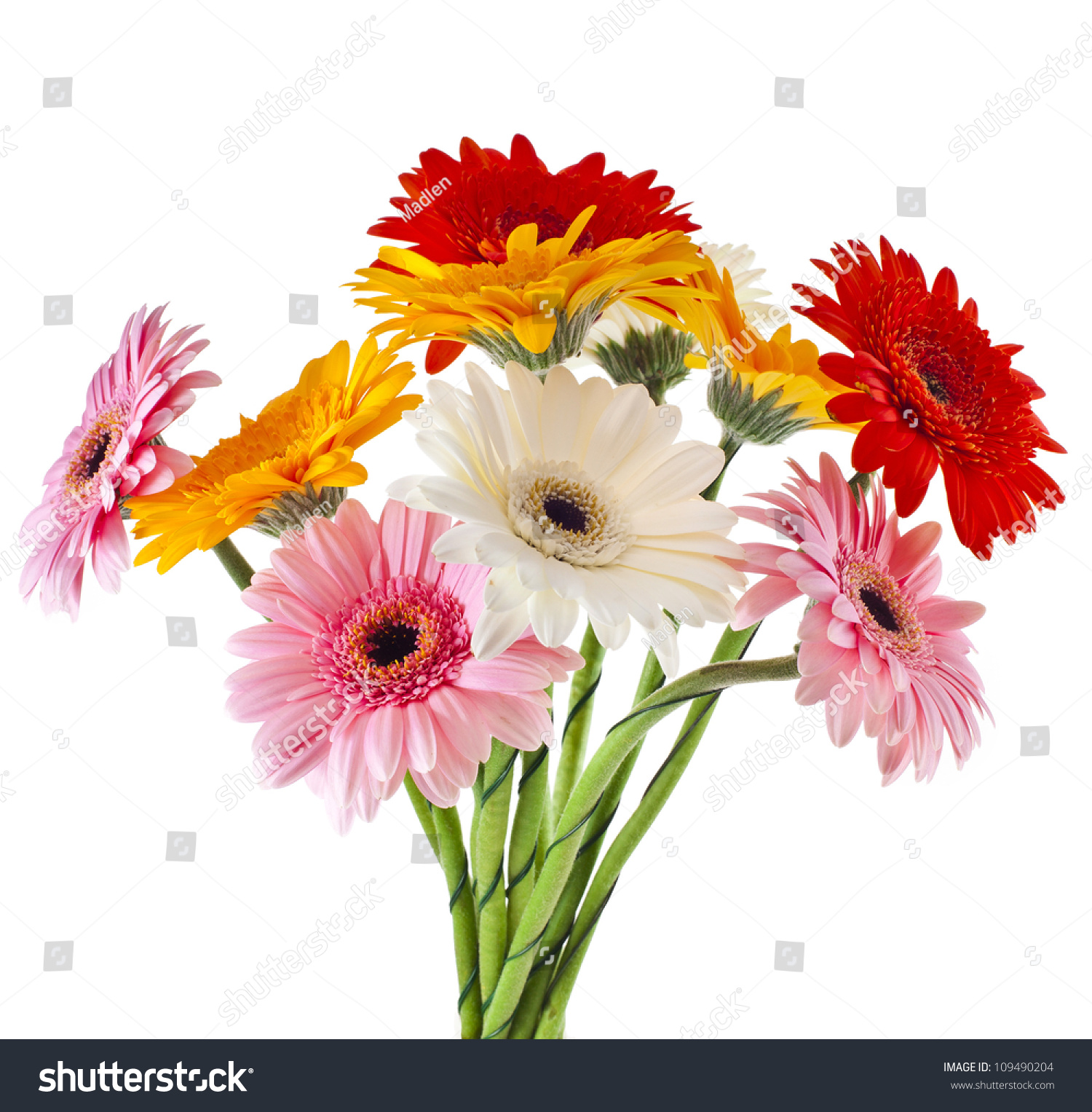 Green gerbera daisy bouquet 817842 sciencemadesimplefo sms tagsgerberas tips gardening pictures care meaninggreen gerbera daisy daisy flower deliveryhistory and meaning of gerbera daisies proflowers blog izmirmasajfo