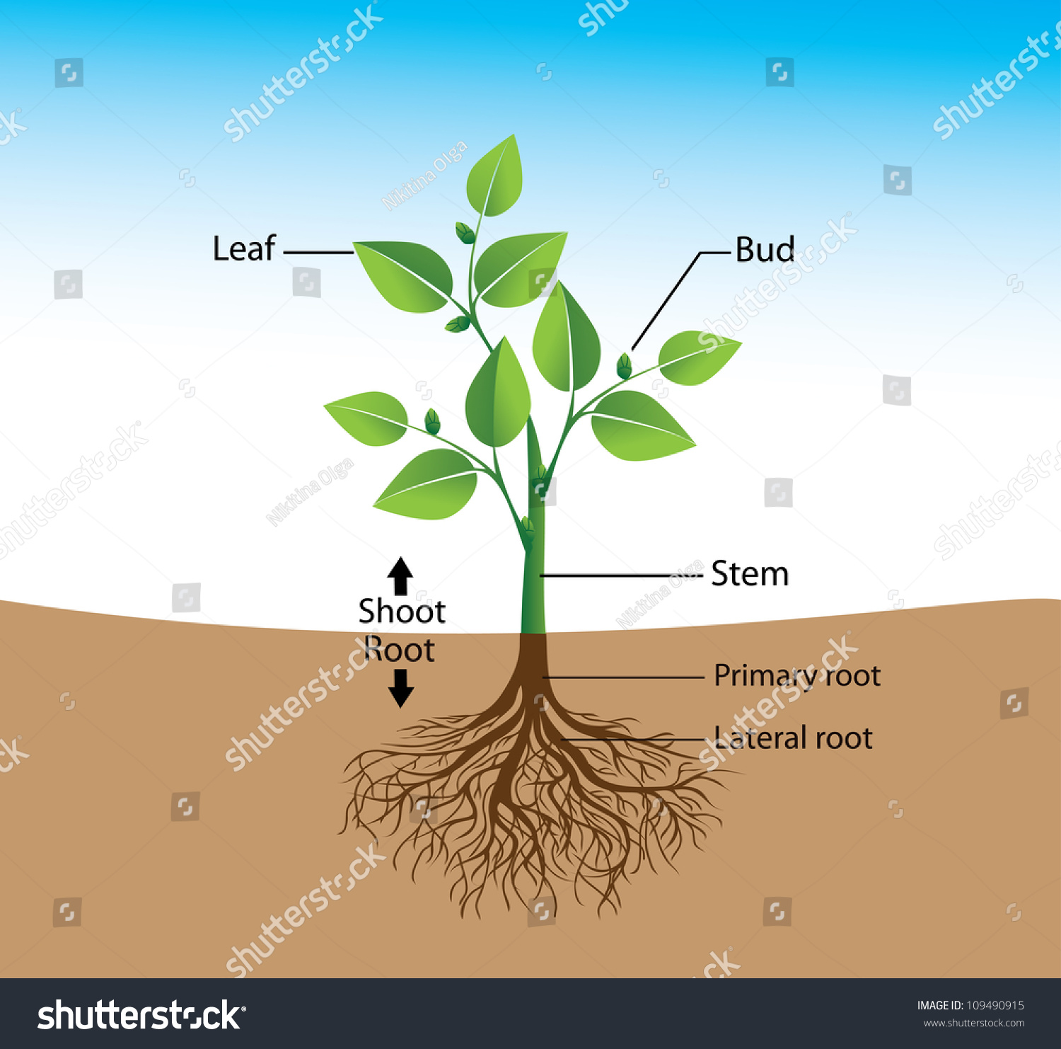 Structure The Plant A Visual Aid For Training Stock Vector Illustration 1