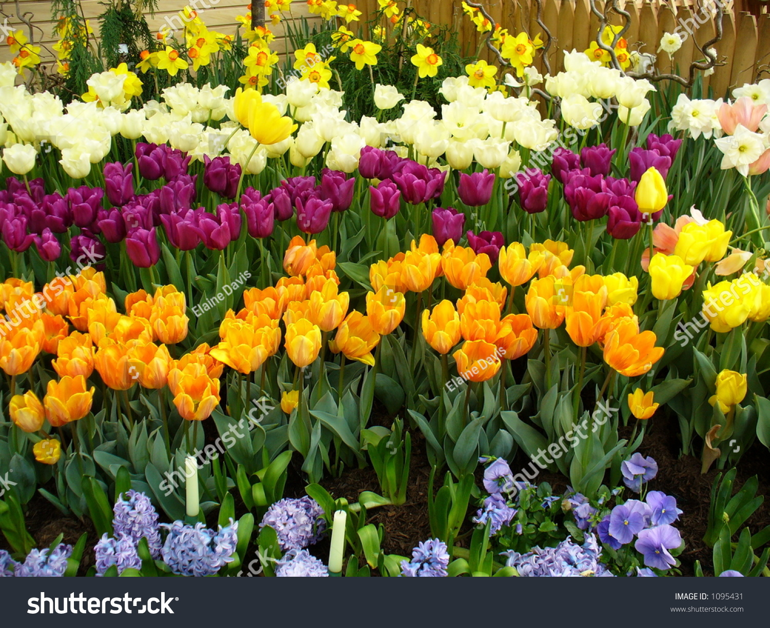 All Types Flowers Stock Photo 1095431 - Shutterstock