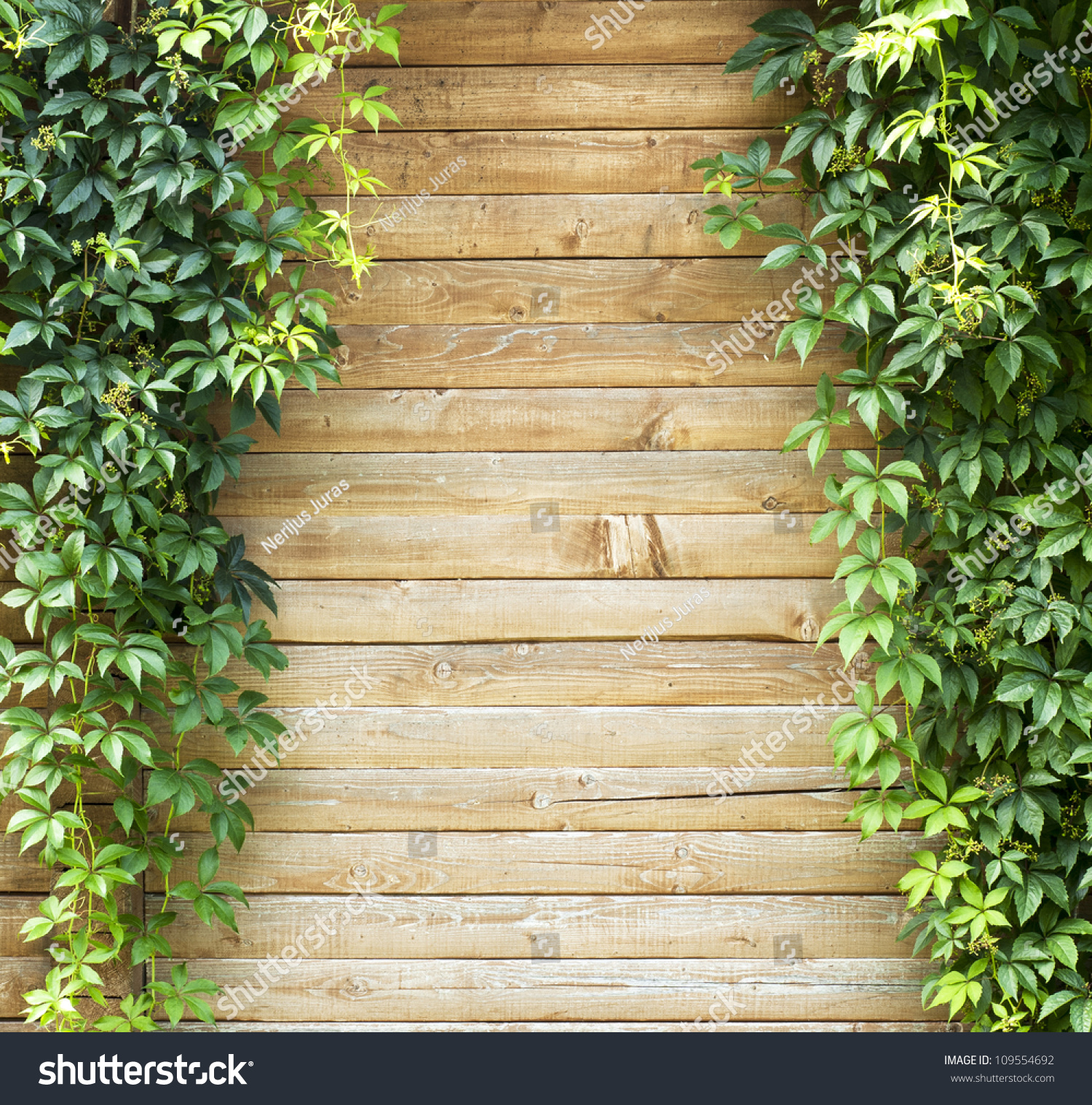 Green Creeper Plant Plank Wall Background Stock Photo (Royalty Free ...