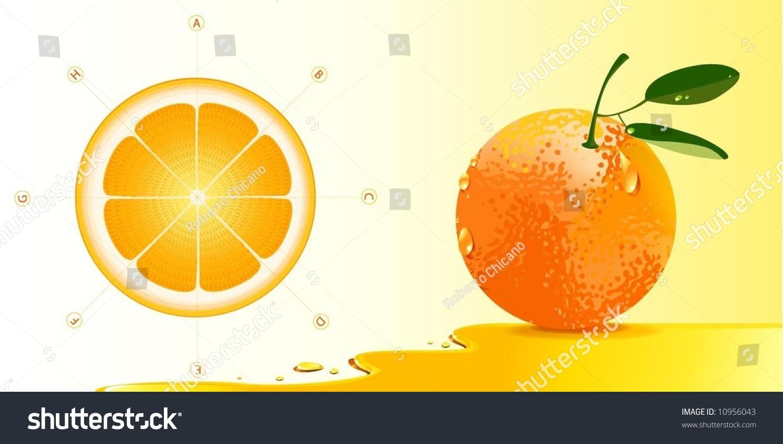 Deatailed Orange Anatomy Stock Vector Royalty Free 10956043