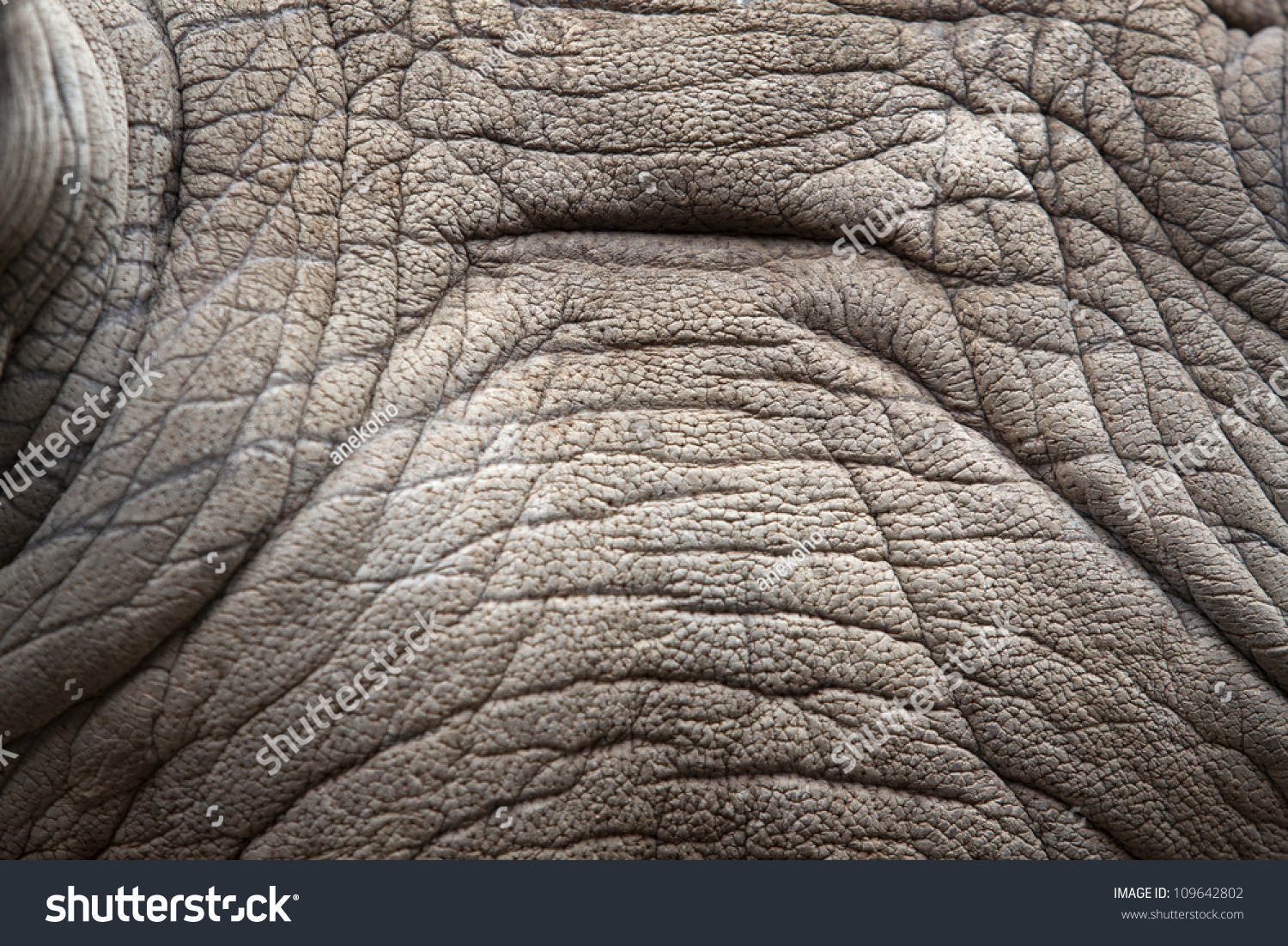 how to get a white background on rhino