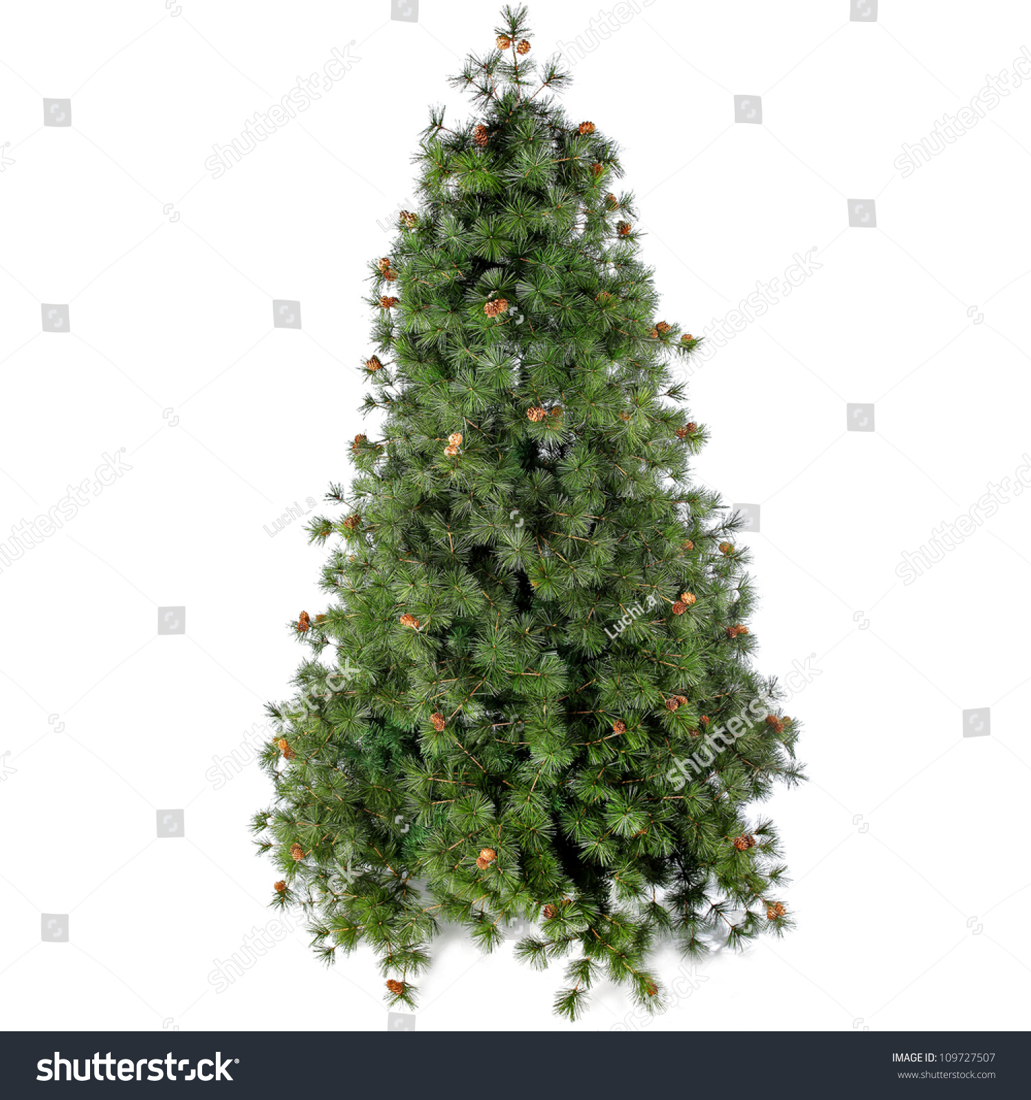 Fir tree for Christmas on white background #109727507