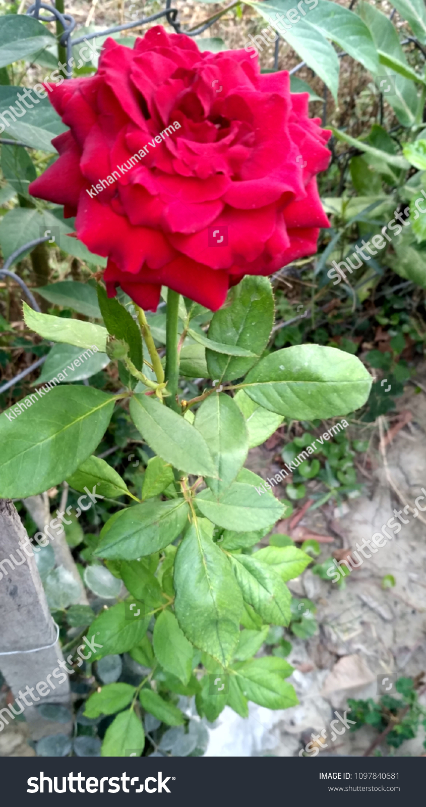 Flower Beautiful Flower Nice Flower Stock Photo Edit Now 1097840681