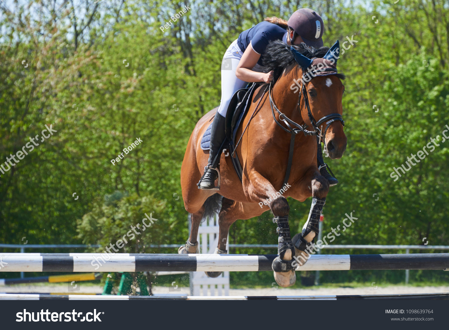 Equestrian Sports Horse Jumping Show Jumping Stock Photo Edit Now 1098639764