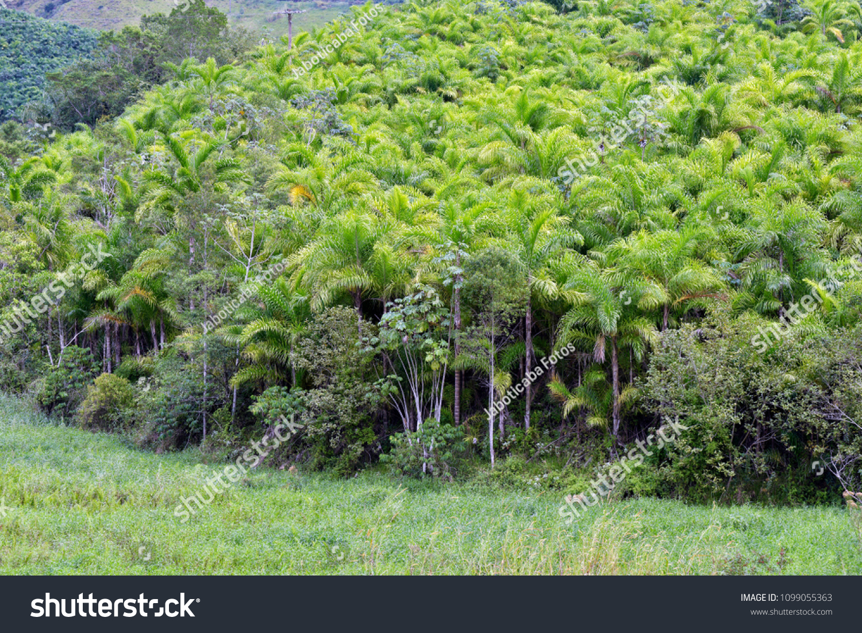 Ribeira São Paulo fonte: image.shutterstock.com