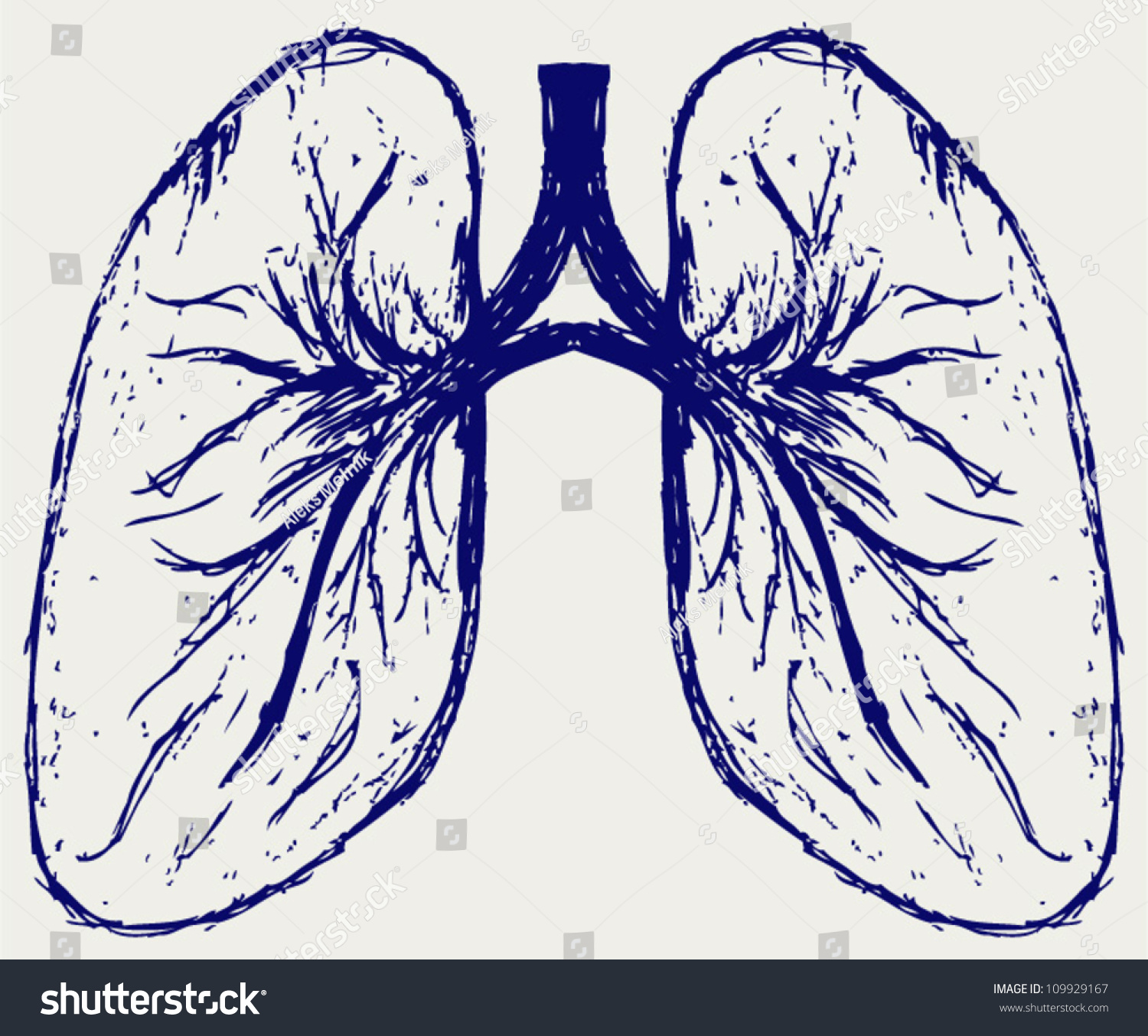 Lungs Person Sketch Stock Vector 109929167 - Shutterstock