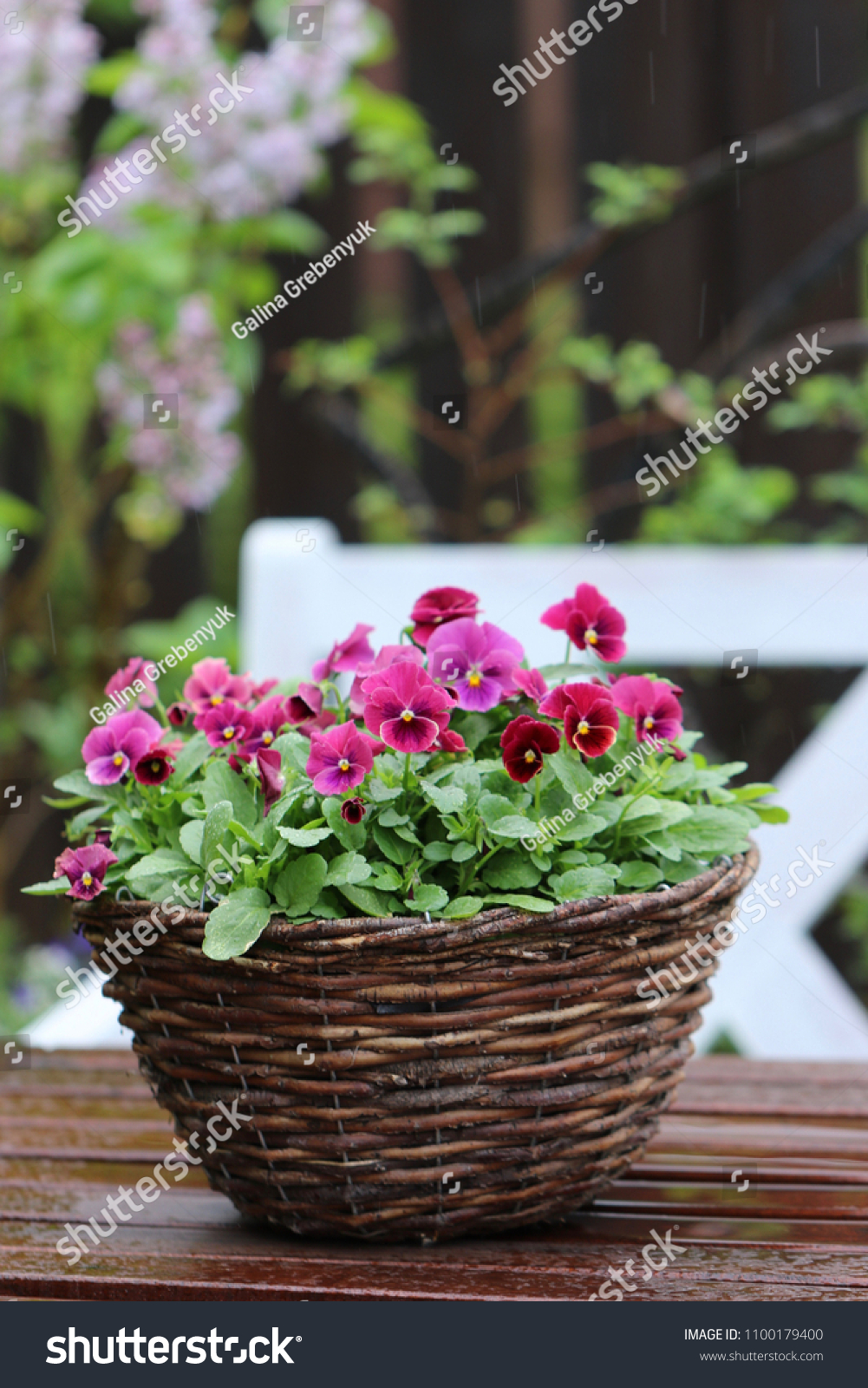 Floral Composition Flowers Vintage Wicker Basket Stock Photo Edit