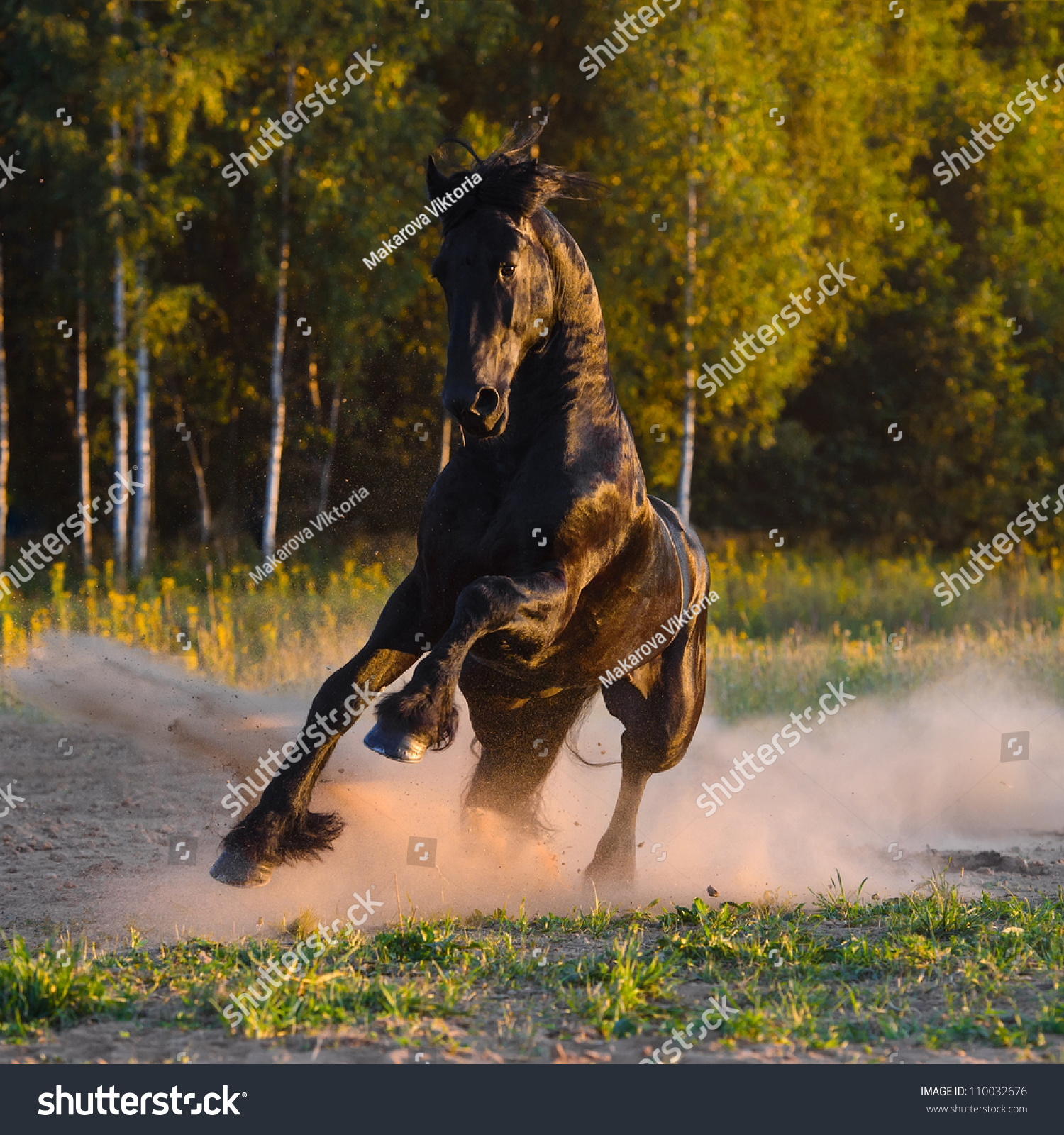 Running Horses Silhouette Wall Border Stock Photo Black Horse Runs Gallop In The