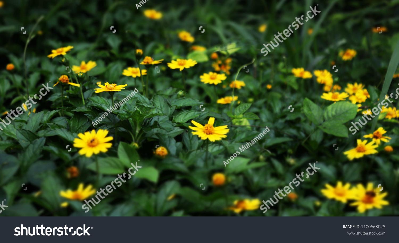 Most Beautiful Flower World Stock Photo Royalty Free 1100668028
