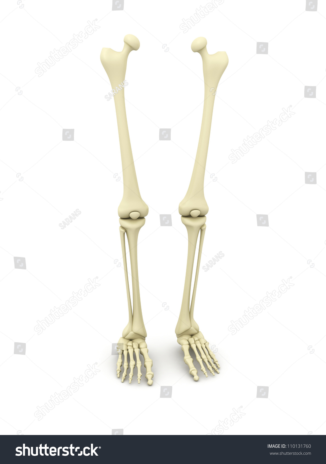 Royalty Free Stock Illustration Of 3 D Rendered Human Leg Bone Stock