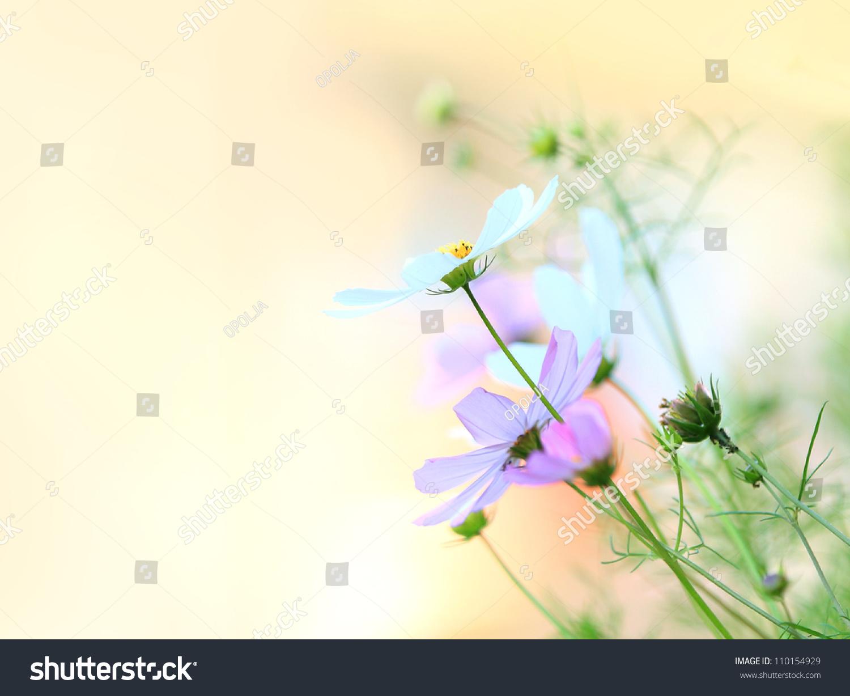 Beautiful floral border flower design stock photo edit now beautiful floral borderflower design izmirmasajfo