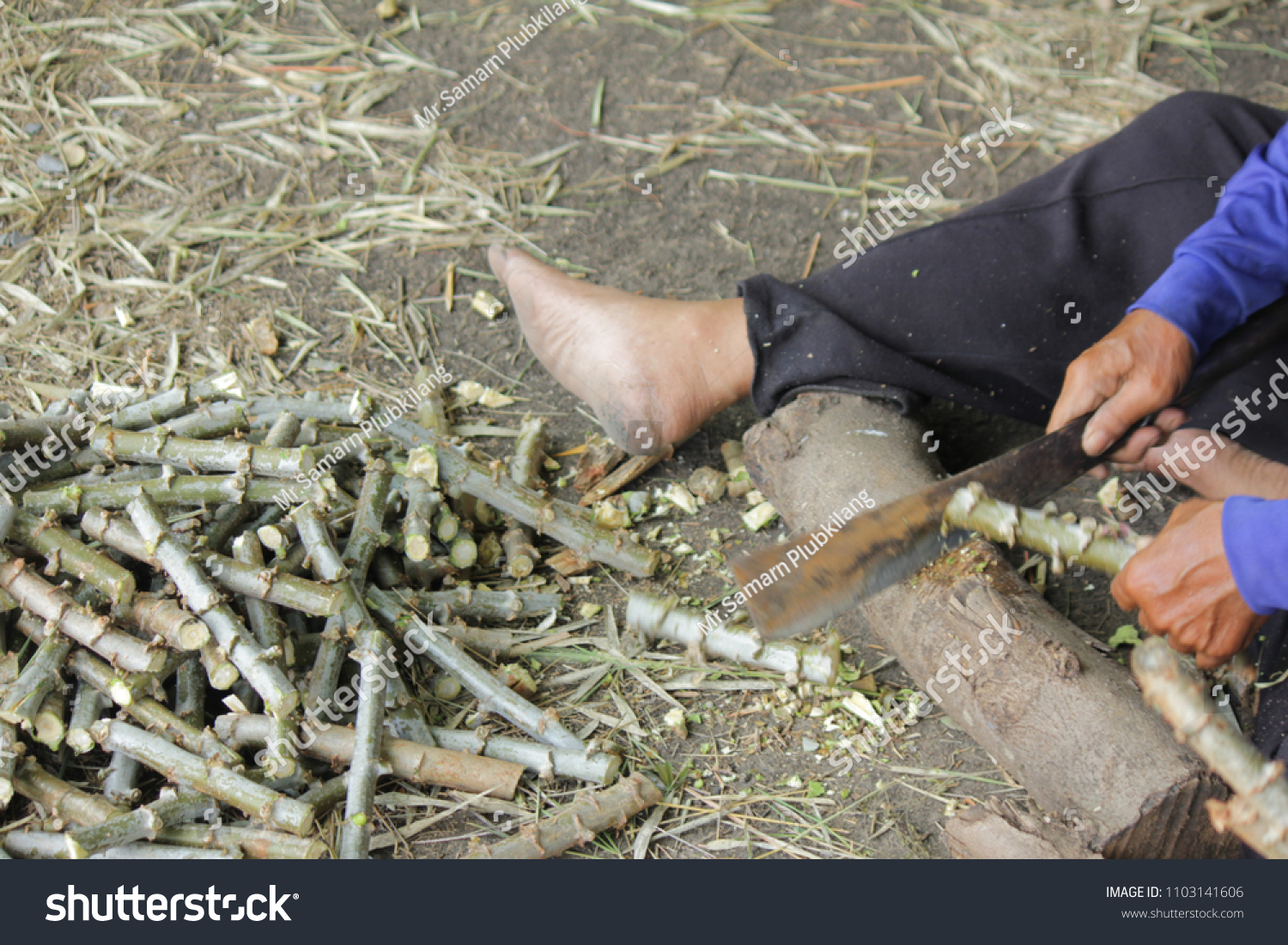 April 30 2018 Farmers Planting Cassava Stock Photo (Edit Now