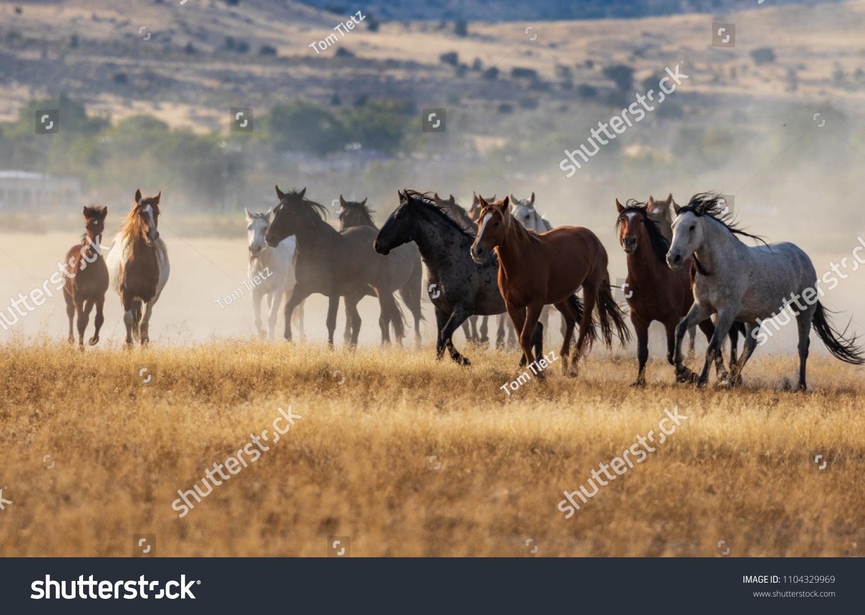 Herd Wild Horses Running Stock Photo Edit Now 1104329969