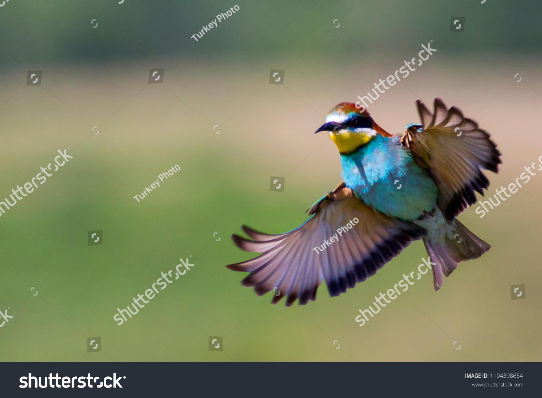 stock-photo-european-bee-eater-merops-ap