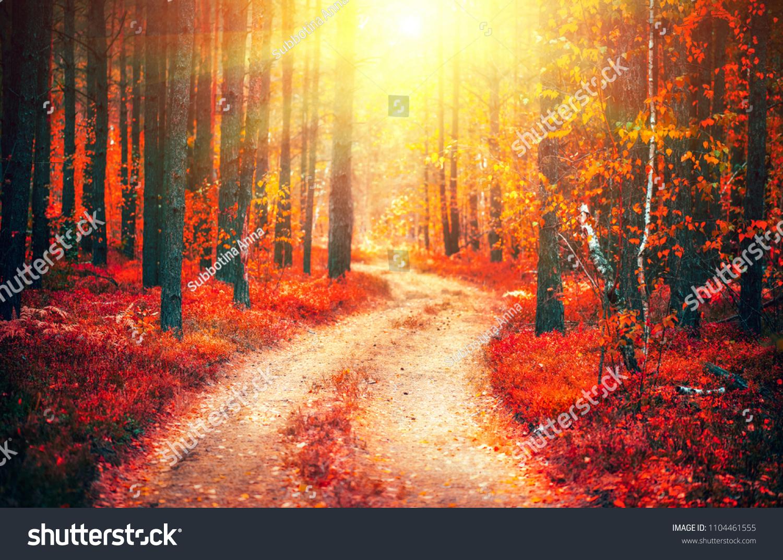 Autumn Fall Scene Beautiful Autumnal Park Stock Photo (Edit Now) 1104461555