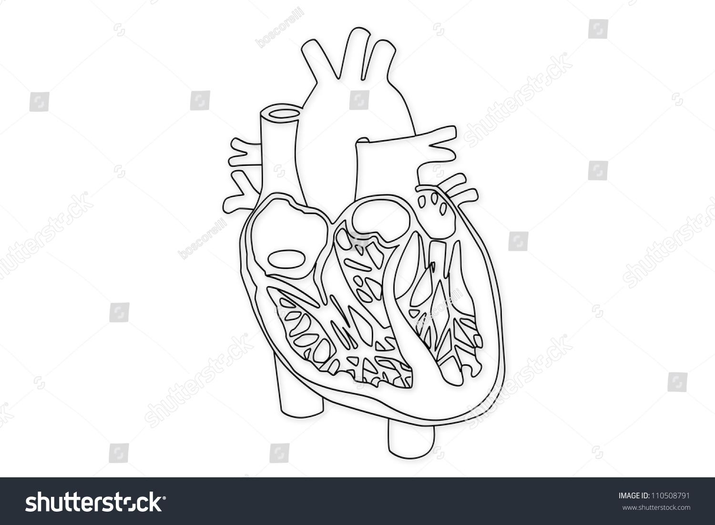 Human Heart Structure Stock Photo 110508791 : Shutterstock