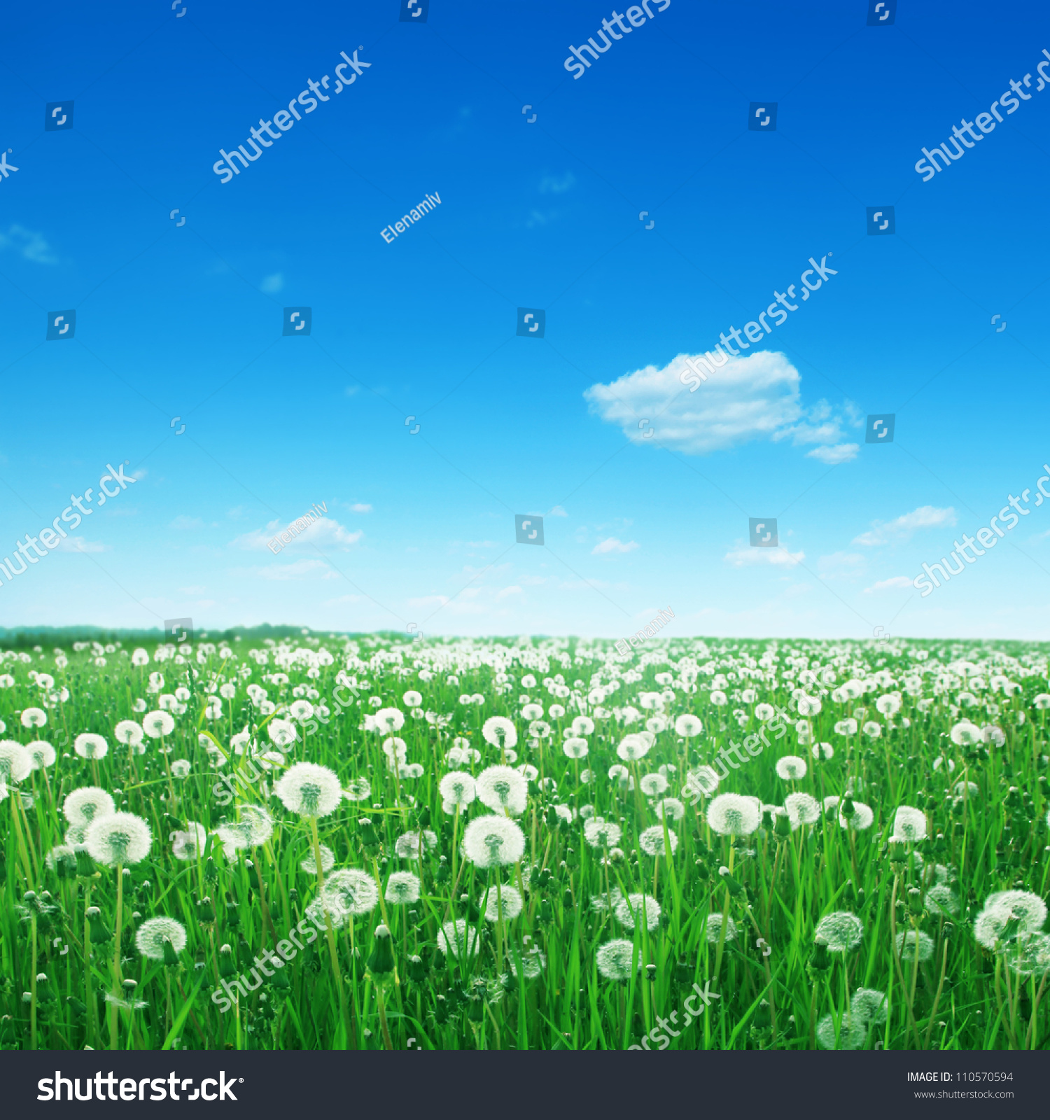 White Cloud In Blue Sky And Dandelion Field. Stock Photo