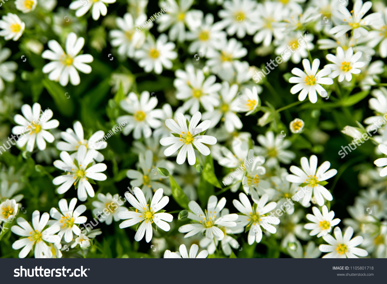 Beautiful spring flowers screensaver stock photo edit now beautiful spring flowers screensaver mightylinksfo