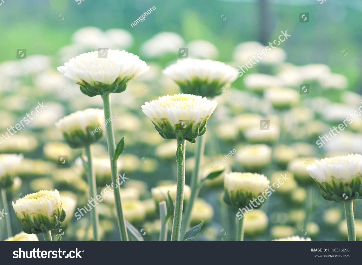 Good Morning Lovely White Flower Sunlight Stock Photo Royalty Free