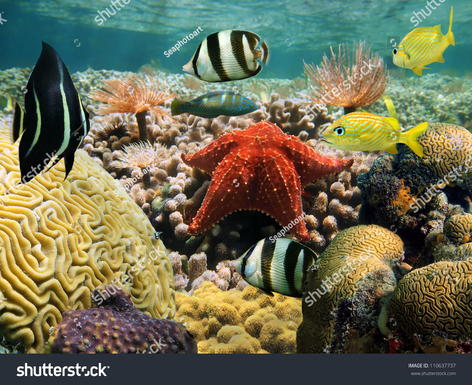 Colorful Sea Life Underwater With Tropical Fish Stock ... |Colorful Underwater Life