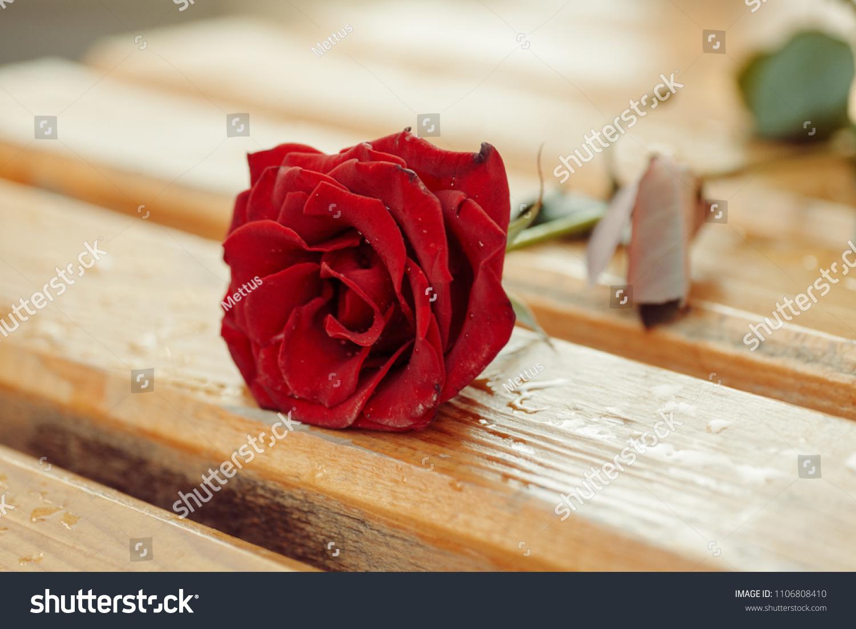 stock-photo-rose-flower-on-bench-close-u