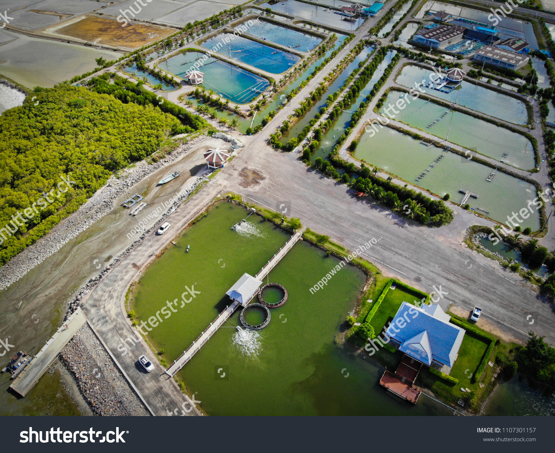 Shrimp Pond Sea Fish Caught Sea Stock Photo (Edit Now) 1107301157