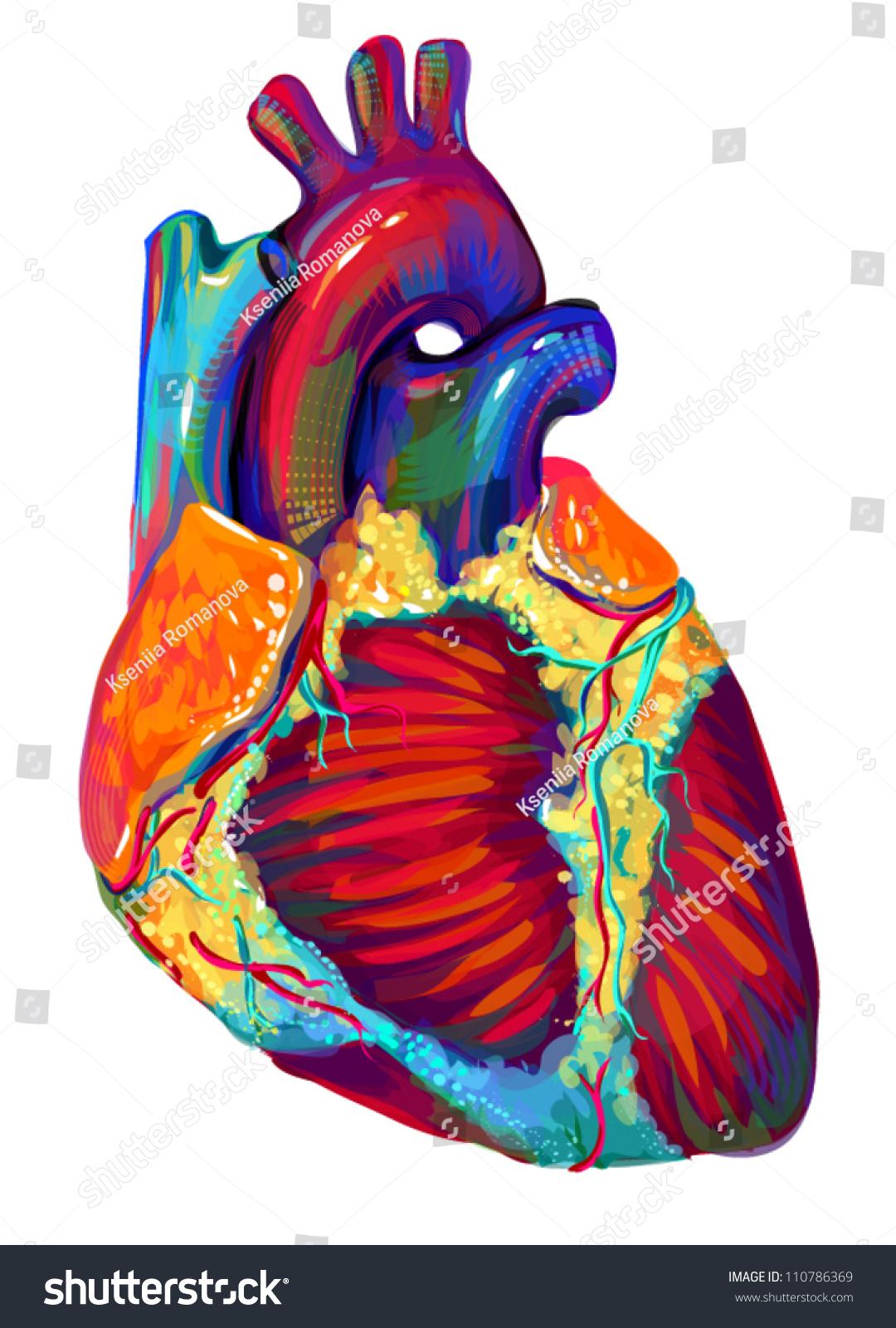 Human Heart Anatomy Art