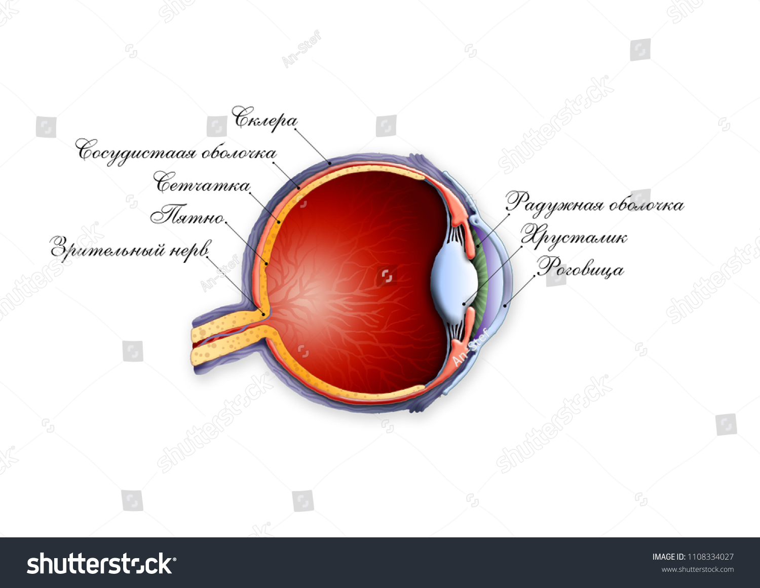 Structure Eye Anatomy Labeled Russian Stock Illustration 1108334027 ...