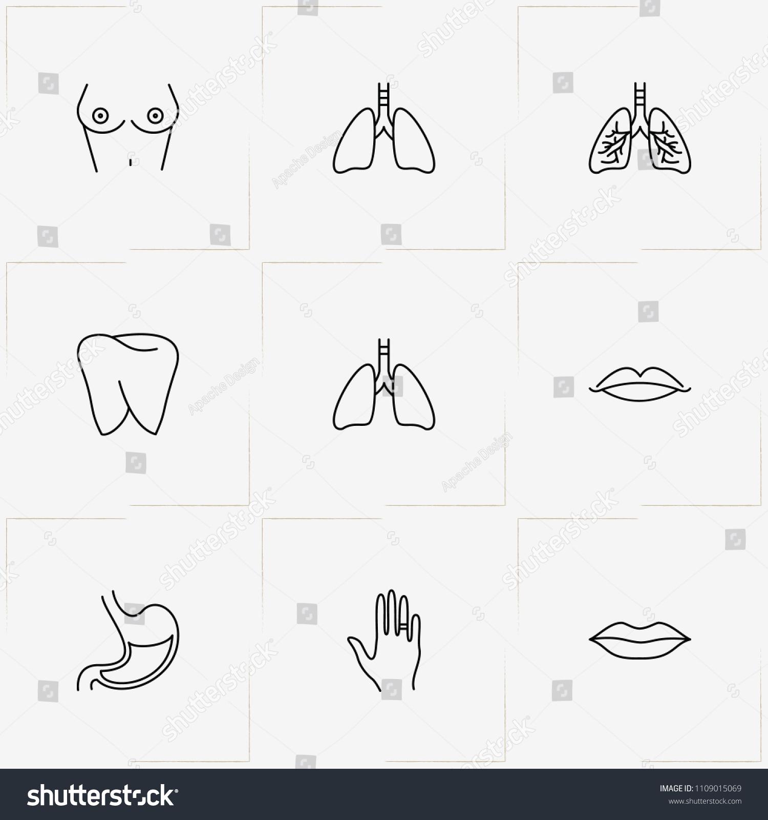Amazing Anatomy Of The Lips Ensign - Anatomy Ideas - yunoki.info