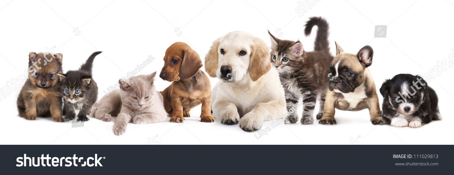 Group of dogs and cats - photo#26