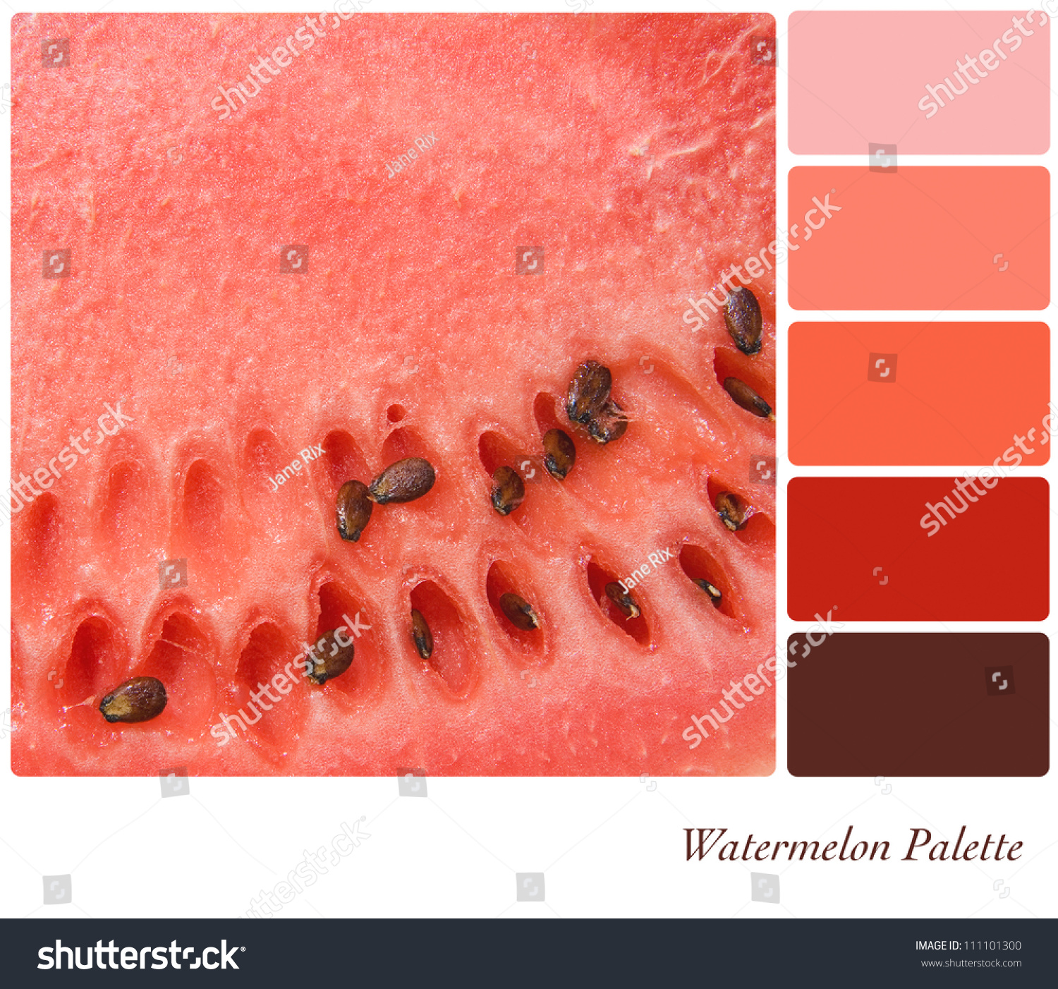 Wedding Watermelon Color watermelon background colour palette complimentary swatches stock with swatches