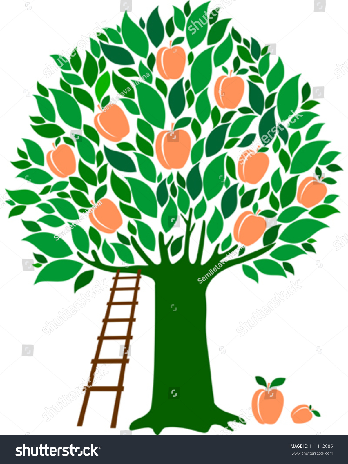 Peach tree isolated on white background stock vector for Peach tree designs