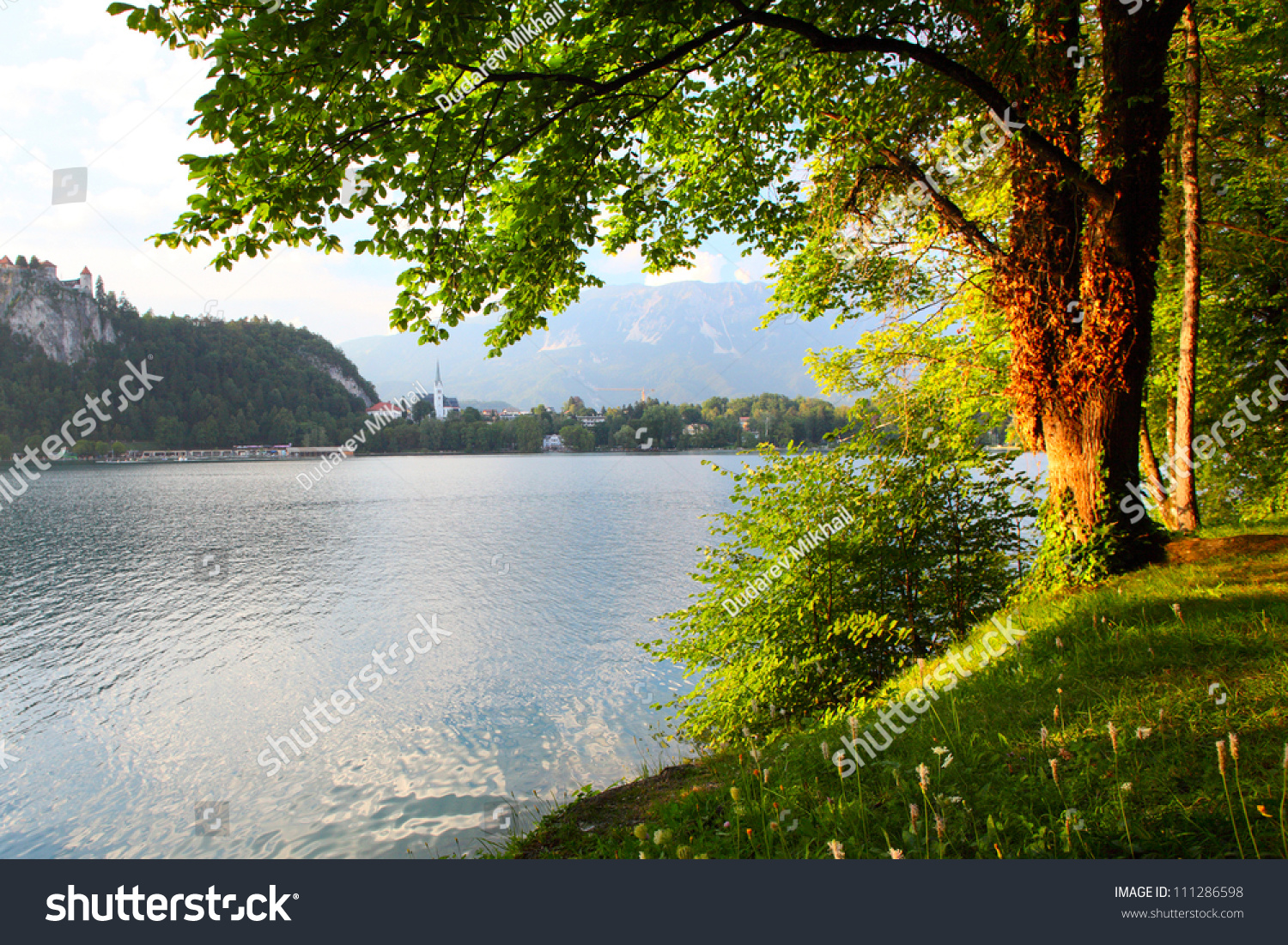 Green Lush Tree On A Pond 39 S Coast At Sunset Stock Photo 111286598 Shutterstock
