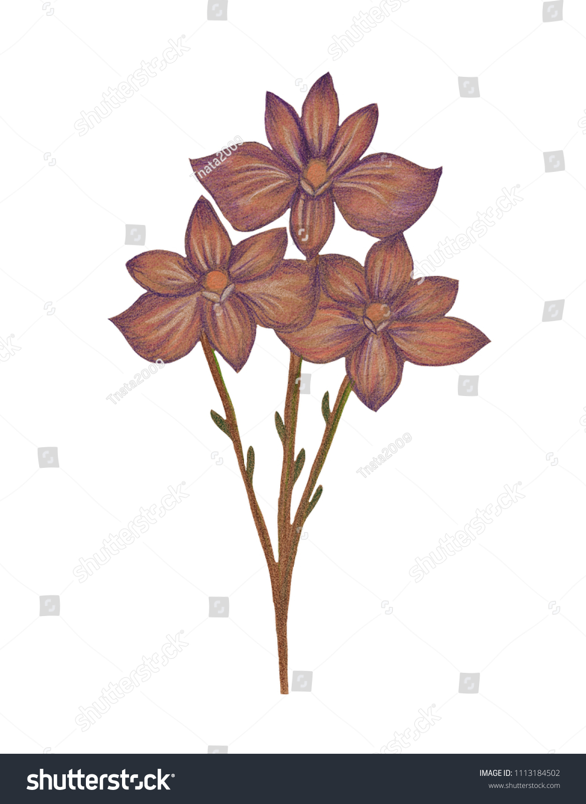 Illustration of colored drawing of abstract flowers of different isolated background