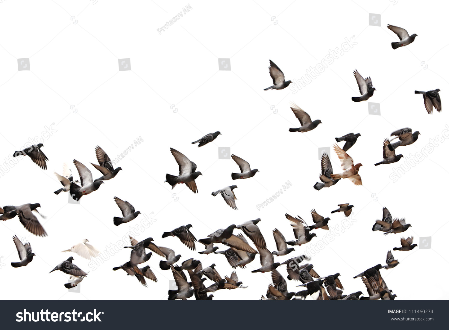 Flying Pigeons Flock Flight Birds Free 111460274