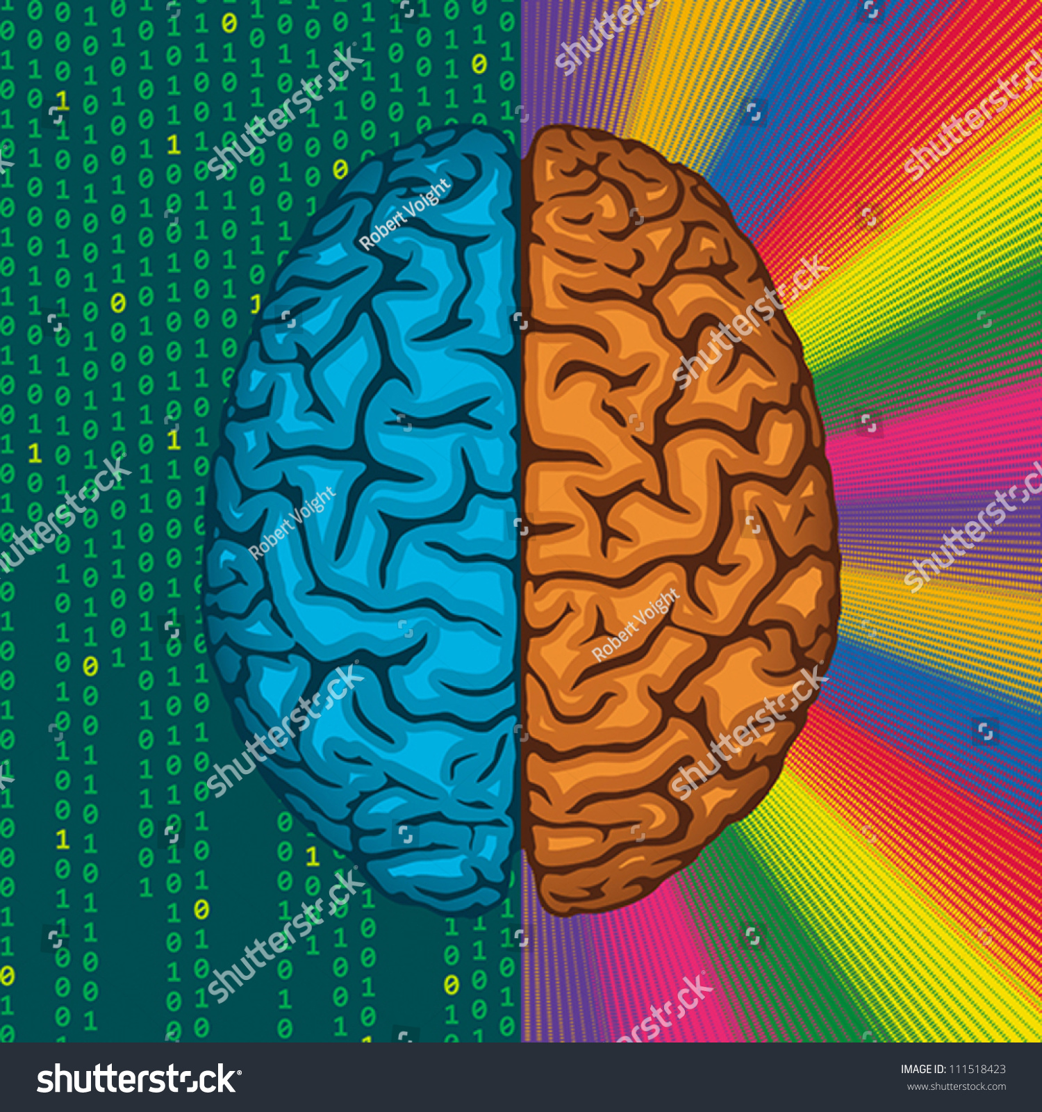 Differences Between Right Left Cerebral Hemispheres Stock Vector ...