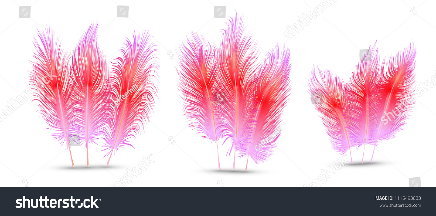070c615b Set Beautiful Festive Feathers Isolated On Stock Vector (Royalty ...