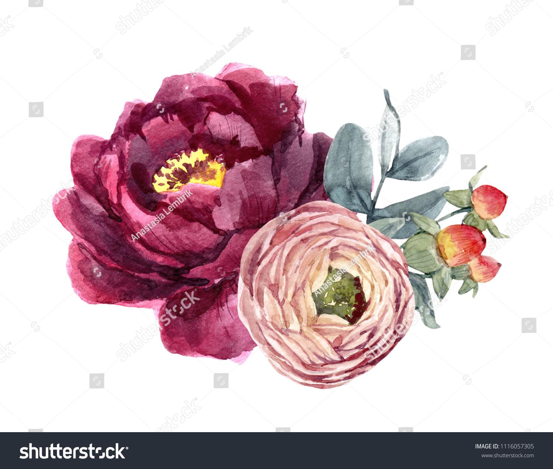 Watercolor Illustration Bouquet Peony Flowers Ranunculus Stock Illustration 1116057305