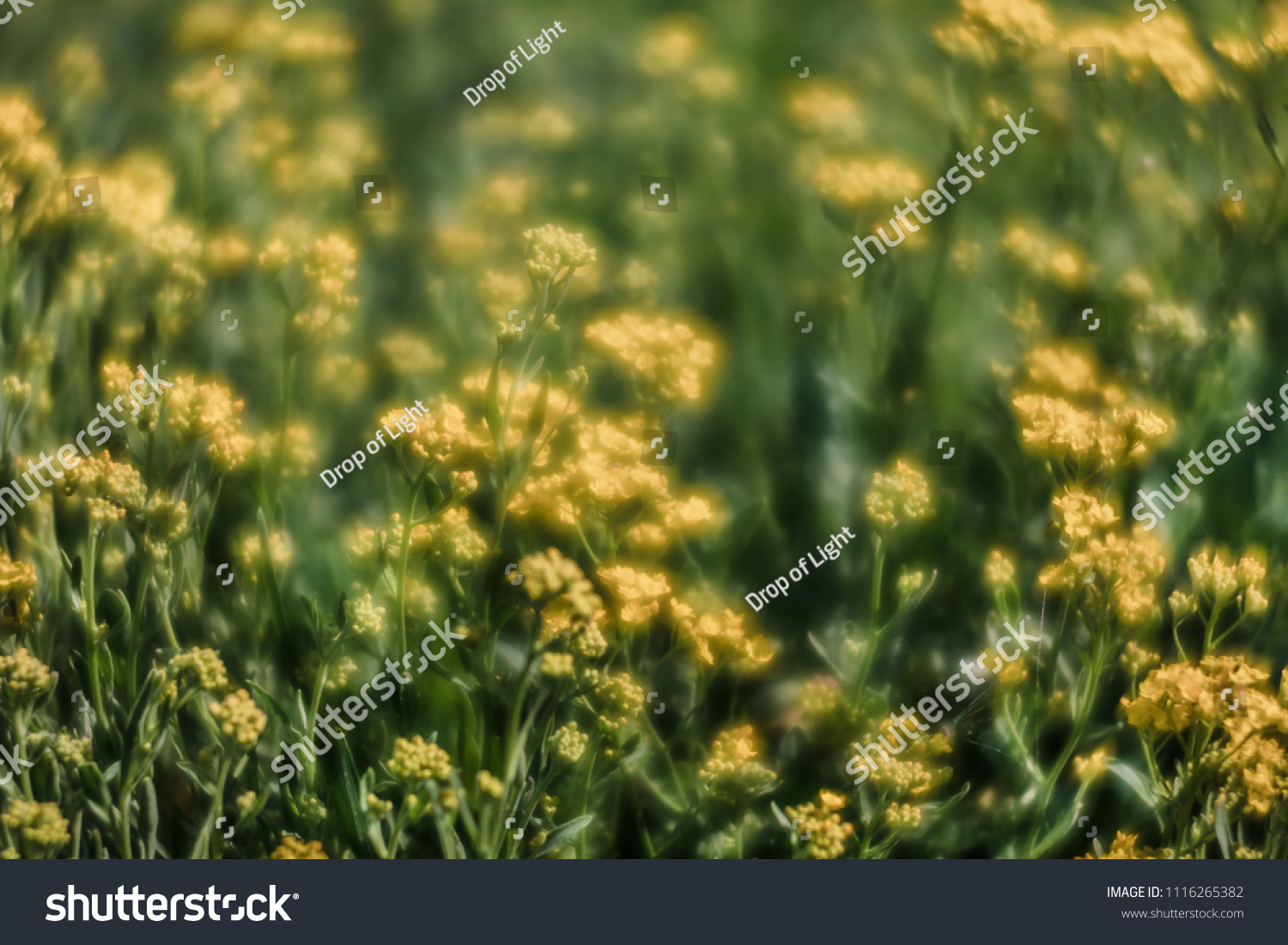 Soft Focus Image Small Yellow Flowers Stock Photo Edit Now