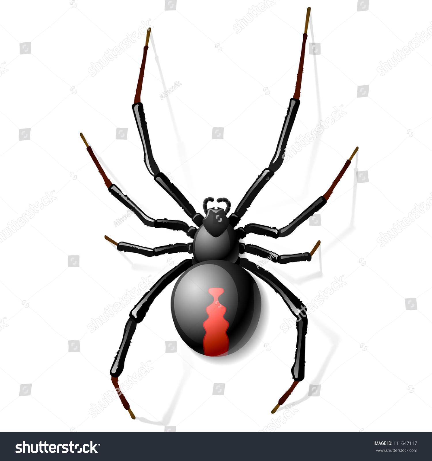 Black Widow Spider Vector Stock Vector 111647117 ...