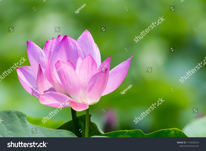 Lotus Lain Nude Photos 98