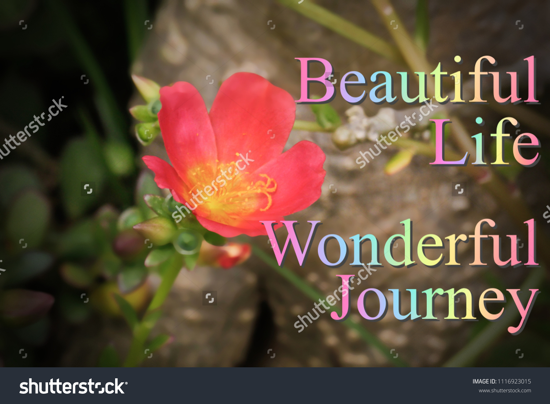 Motivational Inspirational Quotesbeautiful Lifewonderful Journey Nature Stock Photo Edit Now 1116923015