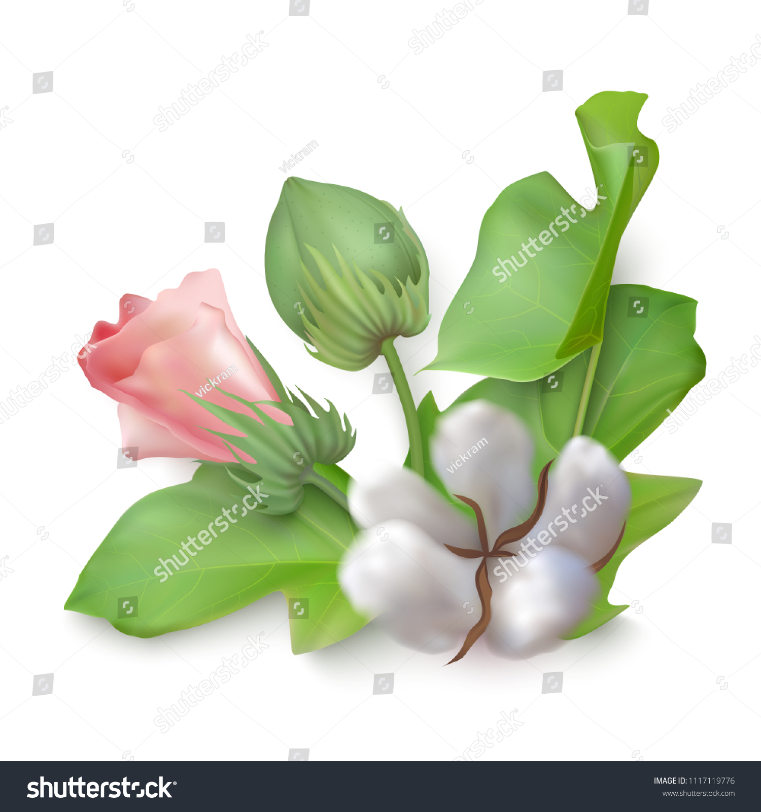 Beautiful photo realistic vector branch of cotton on a white background. Pink cotton blossom flower, boll, bur, leaves.