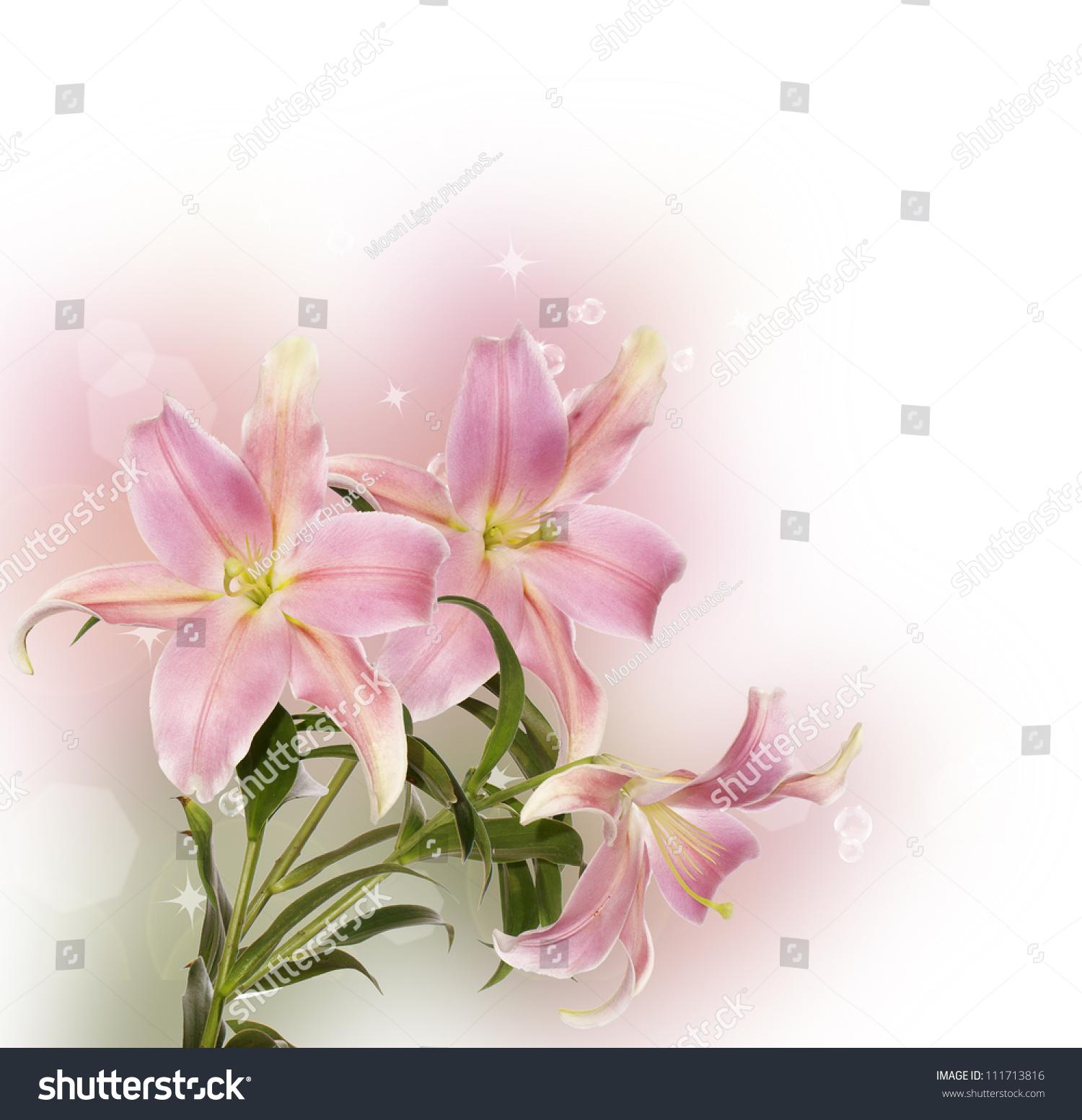 Beautiful Decorative Light Pink Lilyflowers Border Stock ...