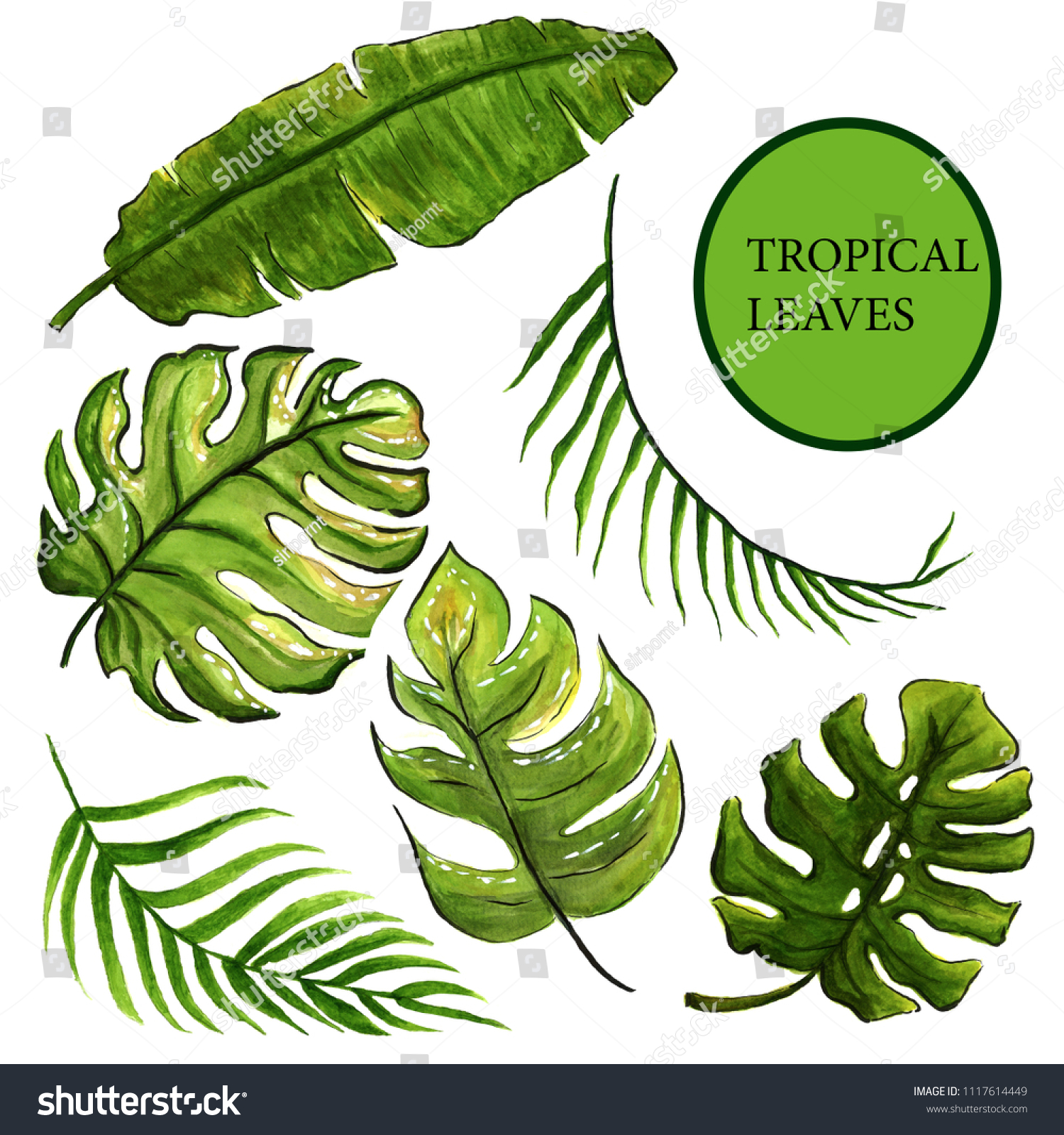Hand Draw Tropical Leaves Different Types Stock Illustration 1117614449 Learn about and revise tropical rainforests, their characteristics and the threats they face, with gcse bitesize geography (aqa). https www shutterstock com image illustration hand draw tropical leaves different types 1117614449