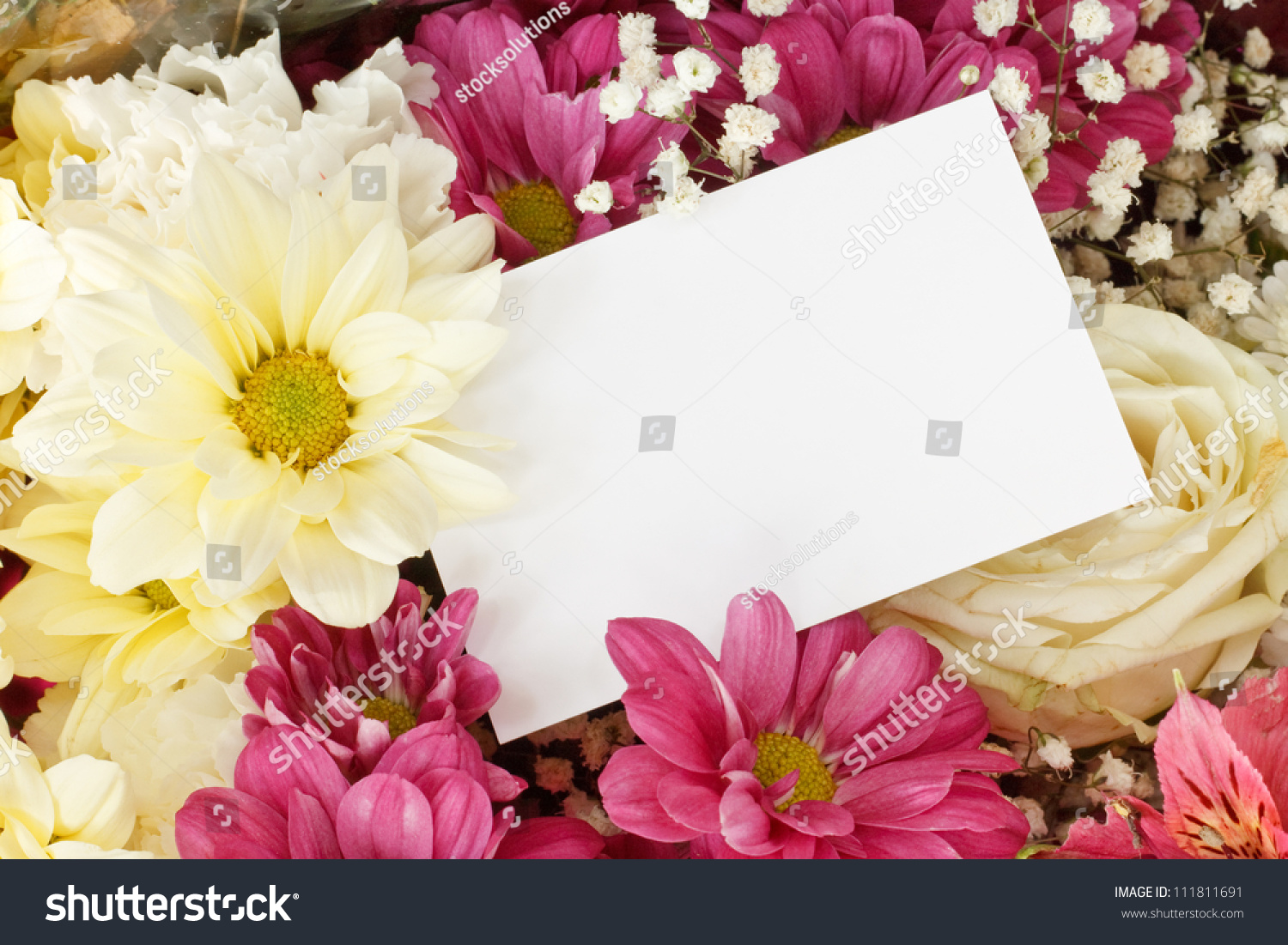Flower Greeting Card On A Purple Background Chrysanthemums